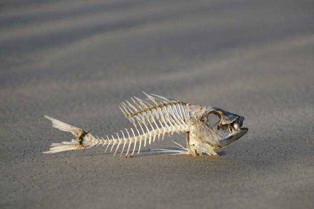 Wildlife and Nature - Fish