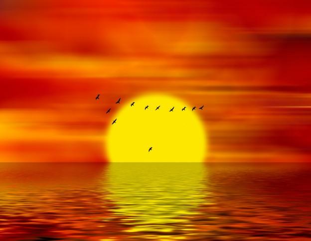 sunset and gaggle